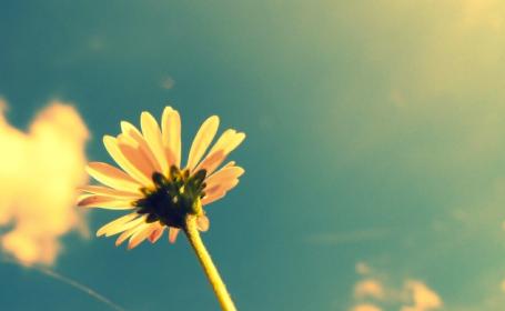 Marguerite dans le ciel
